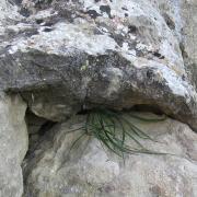 Матала (Matala). Трава сквозь камни.