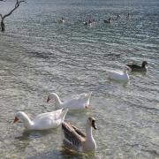 Озеро Курнас (Kournas lake). Часть таверновых меню